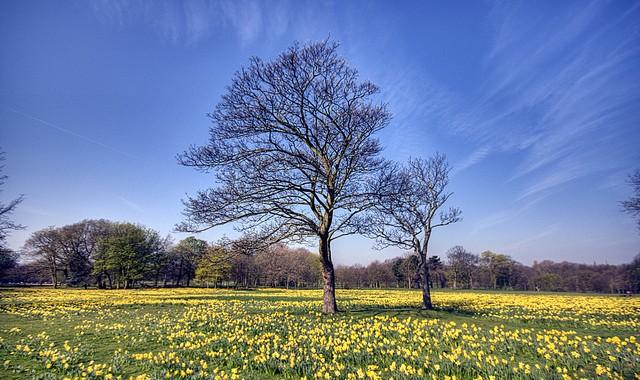 Tree In Field Of Hope